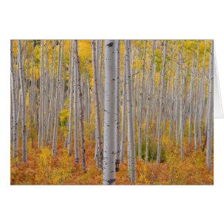 Colorado Fall Aspen Trees Card