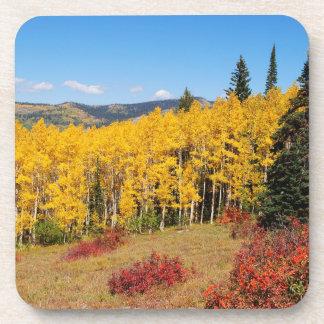 Colorado fall color coaster