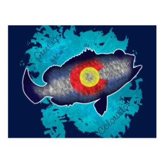 Colorado flag bass fish greetings postcard