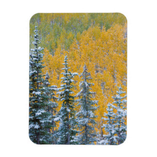 Colorado, Grand Mesa. Early snowfall on forest Magnet