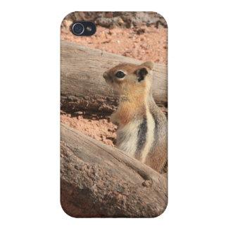 Colorado Ground Squirrel Case For iPhone 4