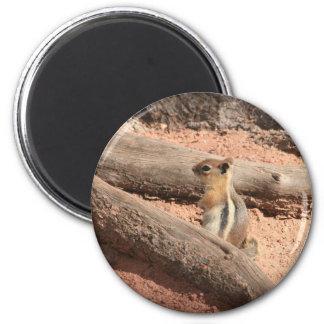 Colorado Ground Squirrel Magnet