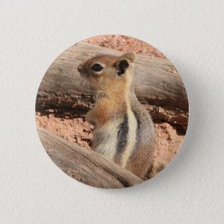 Colorado Ground Squirrel Pinback Button