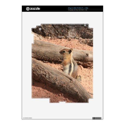 Colorado Ground Squirrel iPad 2 Decals