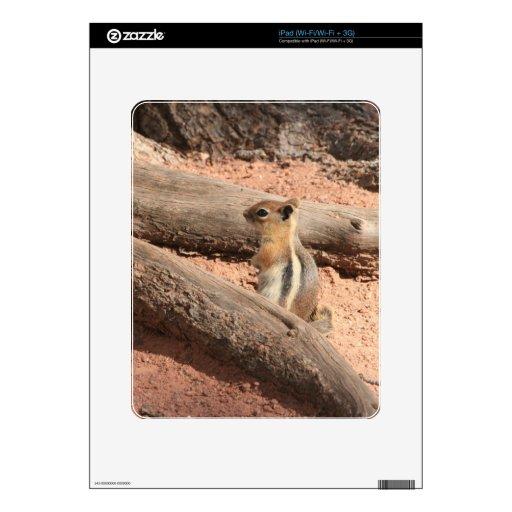 Colorado Ground Squirrel iPad Decal