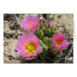 Colorado Hookless Cactus Cards