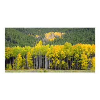 Colorado Mountain fall views Art Photo