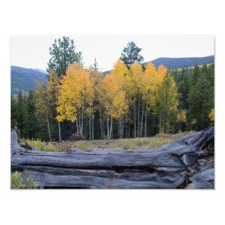 Colorado Mountain View Photo Print