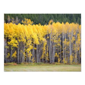 Colorado Mountain Views Photo Print