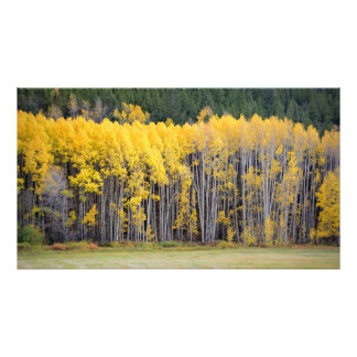 Colorado Mountain Views Photographic Print