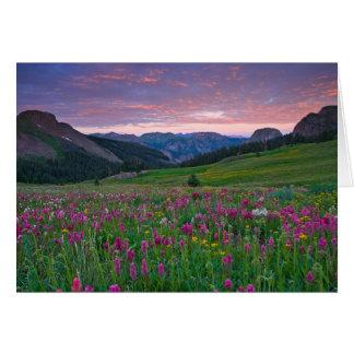 Colorado Mountain WIldflowers Card