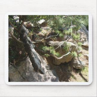 Colorado Pine Branch Mouse Pad