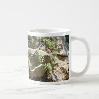 Colorado Pine Branch Mugs