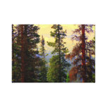 Colorado Pines Stretched Canvas Print