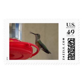 Colorado que tararea el sello grande Bird1