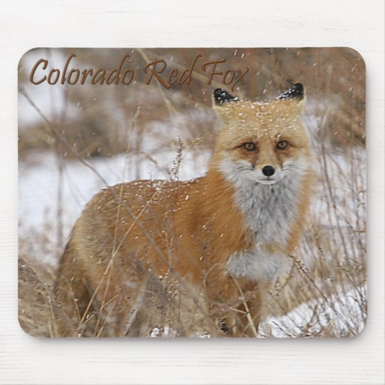 Colorado Red Fox Mouse Pad
