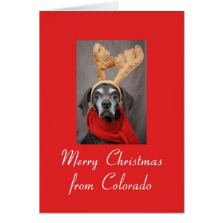 Colorado reindeer pointer merry x-mas card