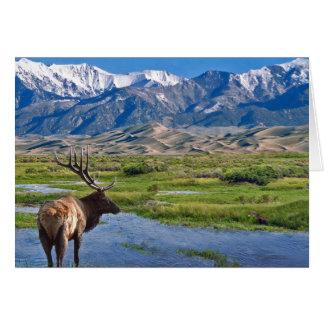 Colorado Rocky Mountains Elk Card