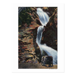 Colorado Springs, CO - Lower Three of Seven Falls Postcard