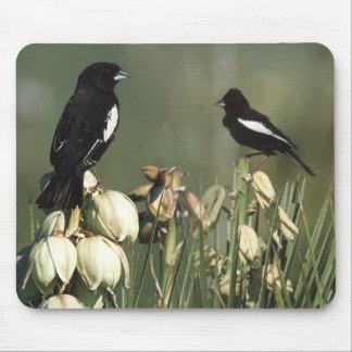 Colorado State Bird - Lark Bunting Mouse Pad