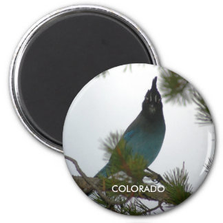 Colorado Stellers Jay Magnets