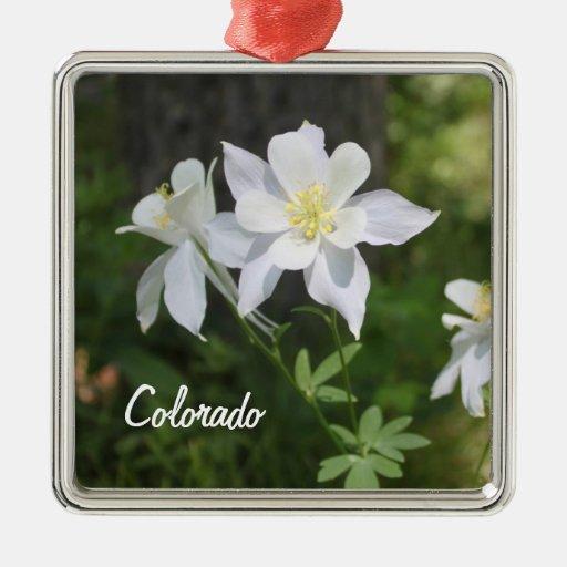 Colorado white columbine christmas ornament zazzle