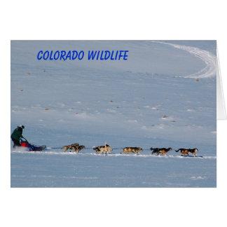 Colorado Wildlife Card