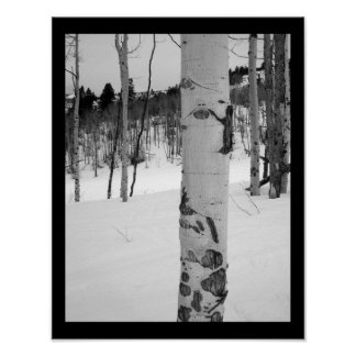 Colorado Winter Aspen Tree Poster Print