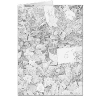 Colorante del mercado de la flor tarjeta de felicitación