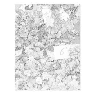 Colorante del mercado de la flor tarjetas postales