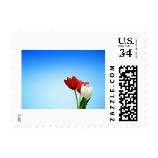 Colorea la fuente de felicidad timbres postales