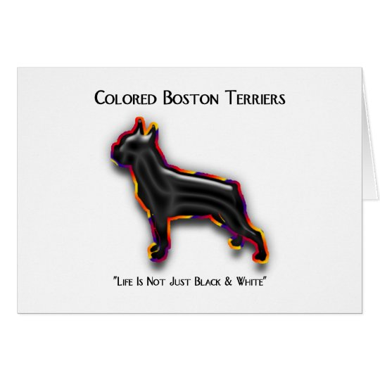 Colored Boston Terrier Card