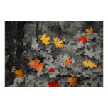 Colored Leaves in a Black and White World Poster