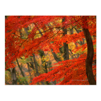 Colored Leaves Post Card
