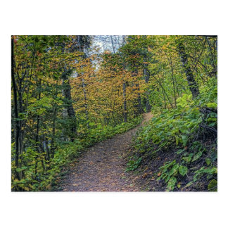 Colored Path Postcard