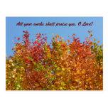 Colores 4 del otoño tarjetas postales
