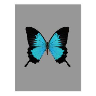 Colores azules y negros brillantes de la original postales