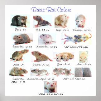 Colores básicos de la rata póster