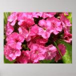 Colores brillantes de la primavera impresiones