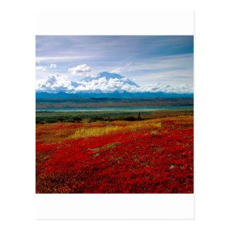Colores brillantes del parque de Denali Alaska Tarjetas Postales