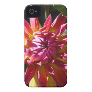 Colores brillantes iPhone 4 protector