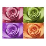 Colores color de rosa postal