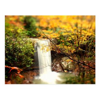 Colores de la caída de las caídas del pepino tarjetas postales