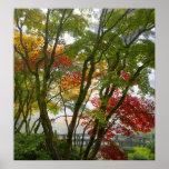 Colores de la caída de los árboles de arce en post