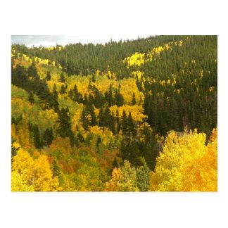 Colores de la caída en Colorado, oro de Aspen Postal