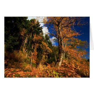 Colores de la caída en el creciente del lago tarjeta de felicitación