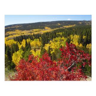 Colores de la caída en la postal de Rockies