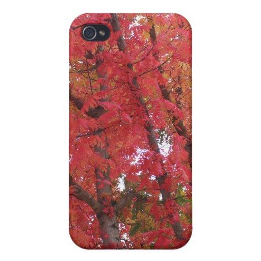 Colores de la caída en Napa, California iPhone 4 Fundas
