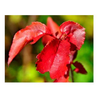 Colores de la caída - hoja roja tarjeta postal