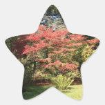 Colores de la caída pegatina en forma de estrella